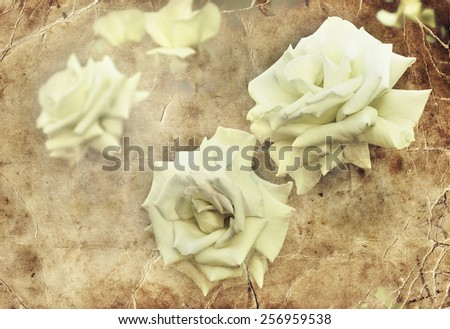 Beautiful spring flower background with pretty large rose, abstract nature background - stock photo