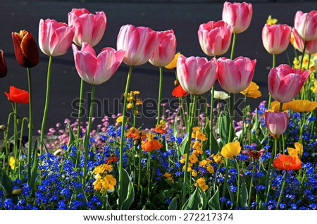 Beautiful spring flowerbed with pink tulips and multicolored garden flowers. Selective focus  - stock photo