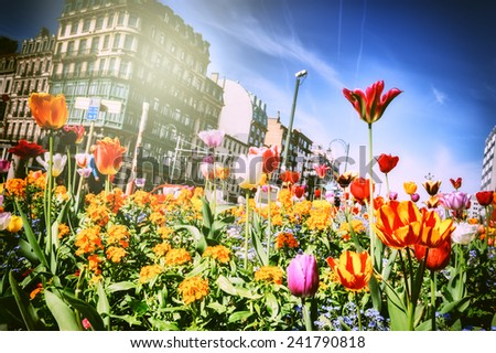 Beautiful spring flowers at sunny day  - stock photo