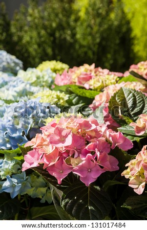 Beautiful spring flowers for sale at street market. Focus on pink hydrangea in the foreground. - stock photo