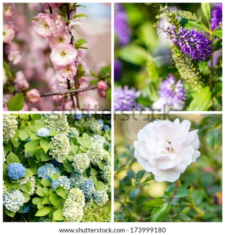 Beautiful spring flowers in a collage.