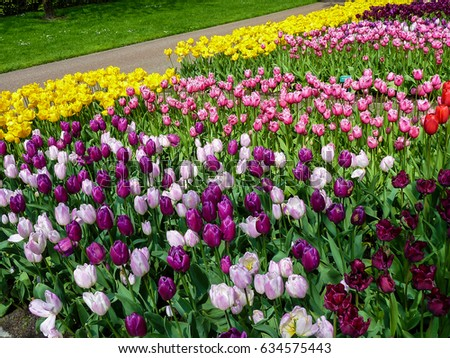 Beautiful spring flowers in Keukenhof park in the Netherlands (Holland)