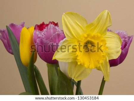 Beautiful spring flowers on a beige background