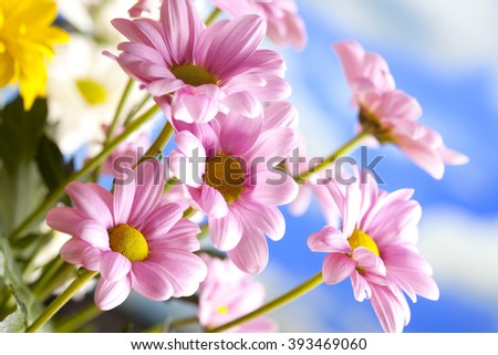 Beautiful spring flowers on blue sky background - stock photo