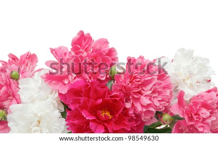 Beautiful spring flowers - peonies
