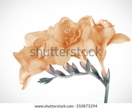 Beautiful spring flowers. Retro effect - stock photo