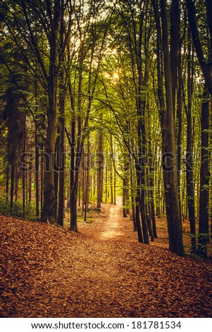 beautiful spring forest - stock photo