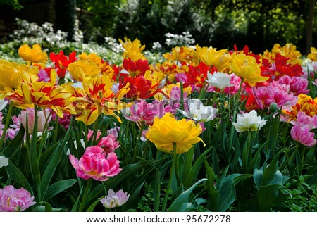 Beautiful spring garden. - stock photo