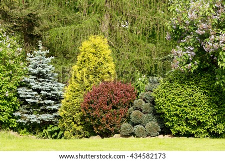 Beautiful spring garden design, with conifer trees, green grass and eneving sun. Luxury design, Gardening. Green garden in spring.
