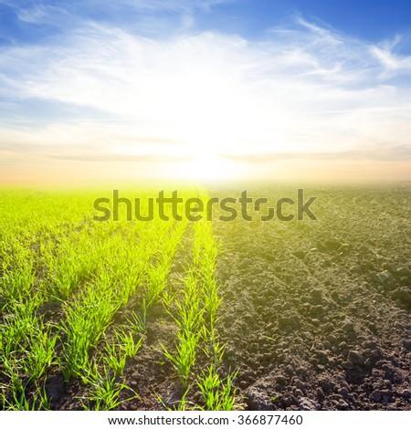 beautiful spring green rural fields scene - stock photo
