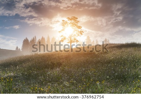 Beautiful spring landscape with flowering meadow and trees at sunrise. - stock photo