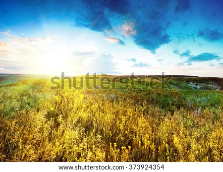 beautiful spring landscape with sun and flowers. natural background