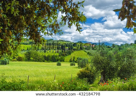 Beautiful spring landscape with vineyards and olive trees.