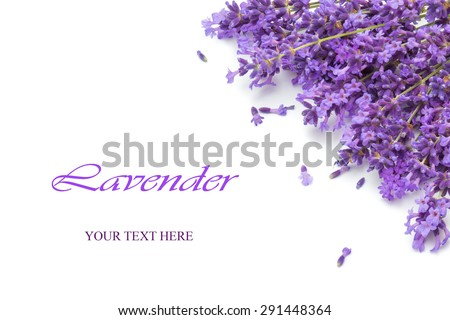 Beautiful spring lavender background - stock photo