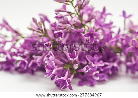 Beautiful spring lilac on a white background.