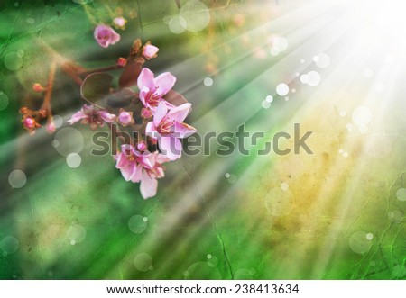 Beautiful spring pink blossoms against a green background with copy space. Purple flowers - stock photo