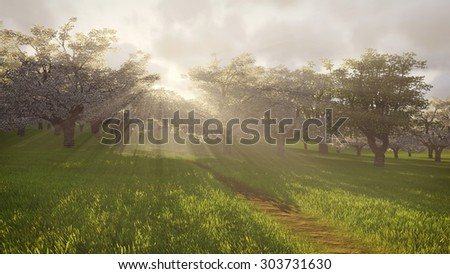 Beautiful spring scenery. Cherry orchard in full bloom basking in radiant sunlight and rays of light shines through the trees.
