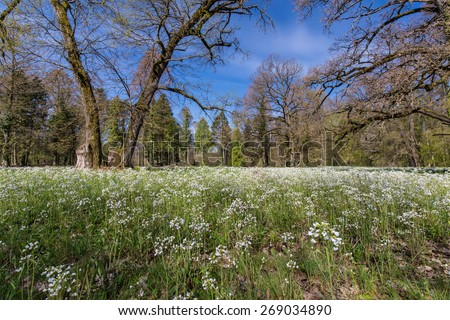 Beautiful spring scenery in a forest, with wild flower blooms - stock photo
