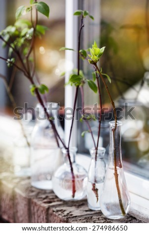Beautiful spring tree branches in glass bottles on window. Home decoration. Toned image. Selective focus. Shallow depth of field.