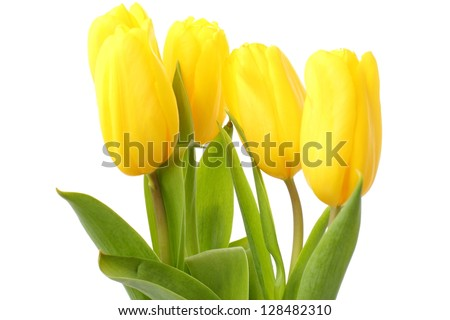 Beautiful spring tulips flowers
