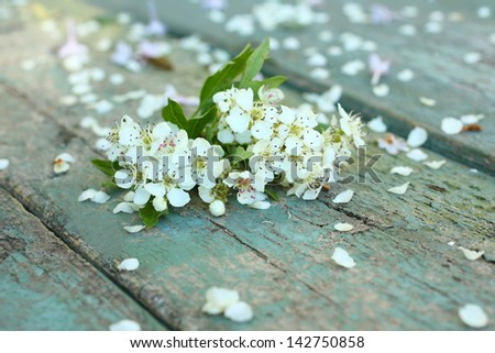 Beautiful spring white flowers on wooden background - stock photo