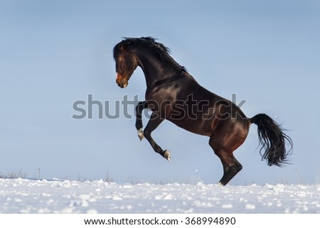Beautiful stallion rearing up in snow at winter day - stock photo