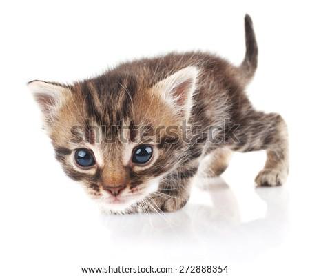beautiful striped kitten on white background - stock photo