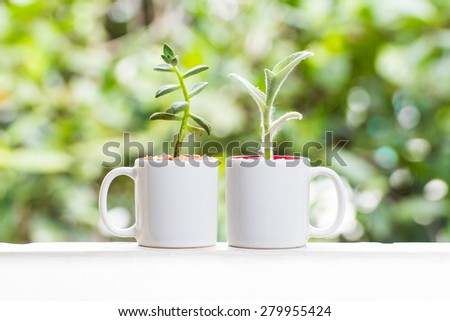 Beautiful Succulent Cactus in a cup - stock photo