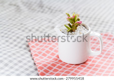 Beautiful Succulent in a cup - stock photo