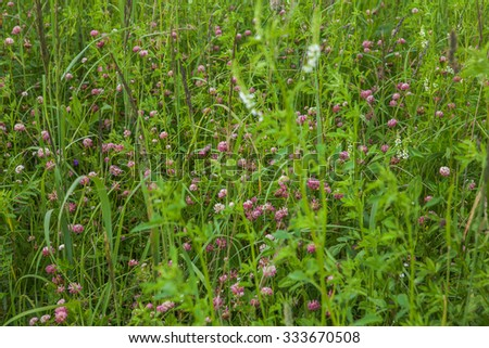 Beautiful summer blossoming meadow with copse - stock photo