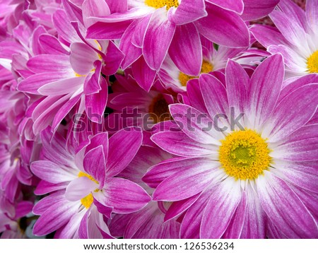 Beautiful summer bunch of flowers. Floral pattern.