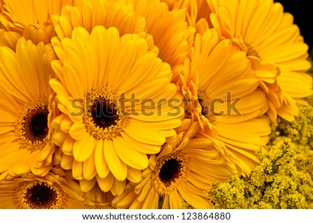 Beautiful summer bunch of flowers. Floral pattern. Gerberas. Abstract background.