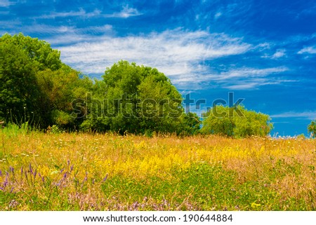 beautiful summer flowering meadow with trees and sky - stock photo