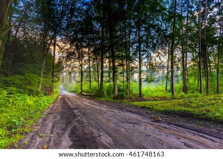Beautiful summer foggy forest after rain. Evening in summer european forest. Colorful landscape