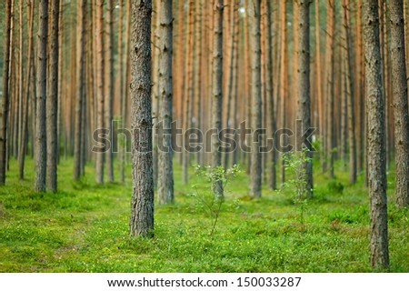 Beautiful summer forest scenery