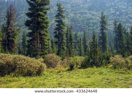 beautiful summer green forest in the sunlight, spring time - stock photo