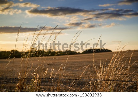 Beautiful Summer image of sun shining and backlighting countryside landscape