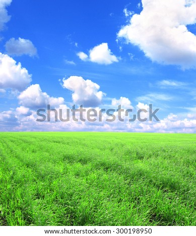Beautiful summer landscape. A green field, blue sky