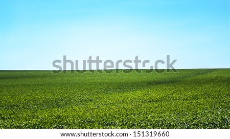 Beautiful summer landscape and background: green field and blue sky - stock photo