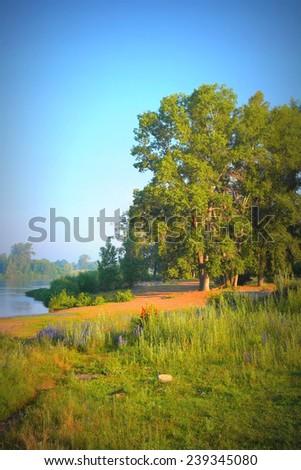 Beautiful summer landscape, big trees near river, morning fog - stock photo