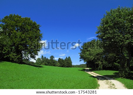 Beautiful summer landscape - country road in the nature with blue sky