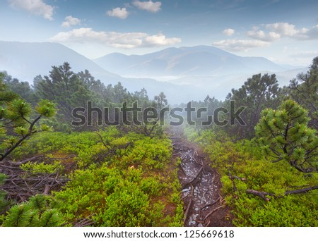 Beautiful summer landscape in the foggy mountains at summer - stock photo