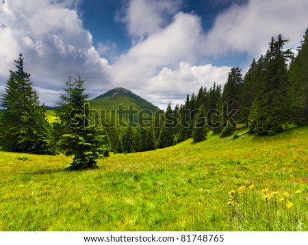 Beautiful summer landscape in the mountains - stock photo