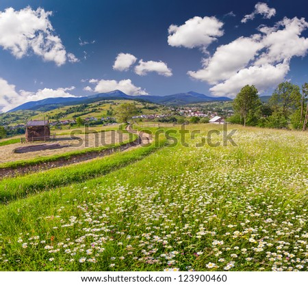 Beautiful summer landscape in the mountains village with a field of camomiles - stock photo
