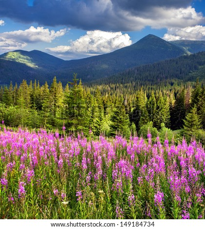 Beautiful summer landscape in the mountains with pink flowers - stock photo