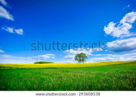 Beautiful summer landscape of meadows with trees. Lithuania - stock photo