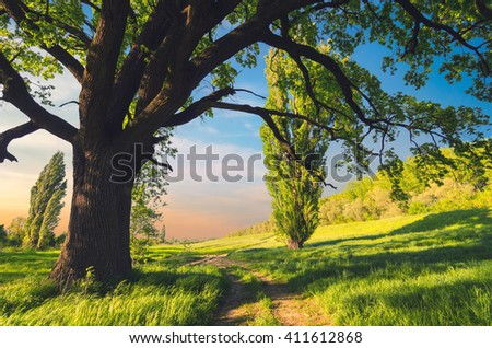 Beautiful summer landscape showing huge oak and a road in sunny countryside nature. - stock photo