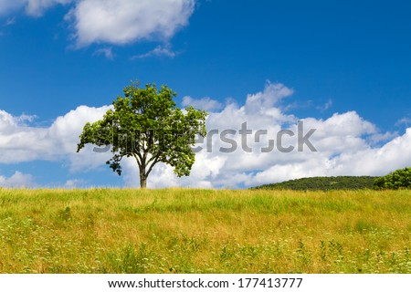 Beautiful summer landscape with a lonely tree
