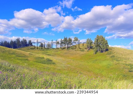 Beautiful summer landscape with birches on the hill - stock photo