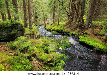Beautiful summer Landscape with Creek in the south Czech, Mountain Sumava - stock photo
